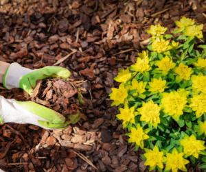 Fallas Flower bed mulch