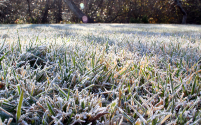 Why You Need Winter Lawn Care