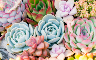Top 8 Tips to Grow Succulents