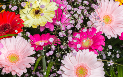 The Best 5 Spring Flowers for the North Texas