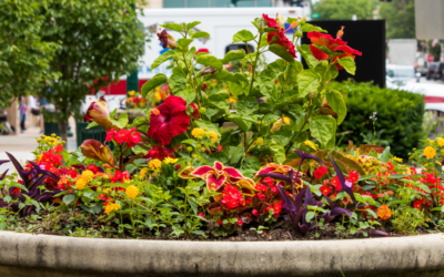 How To Use Accent Planters to Beautify Your Landscape