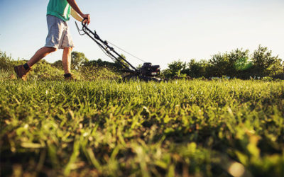 Lawn Mowing: What Time of Day is the Best for Mowing?