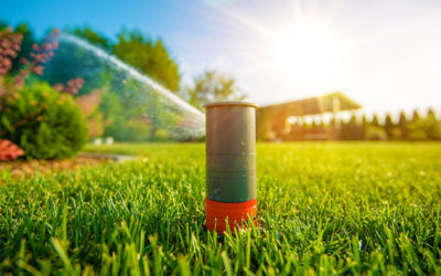 Lawn Maintenance: Tips for Properly Watering Your Yard
