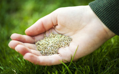 Should You Seed More Rye in the Winter for Perfect Lawn Maintenance?