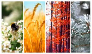 Seasons image